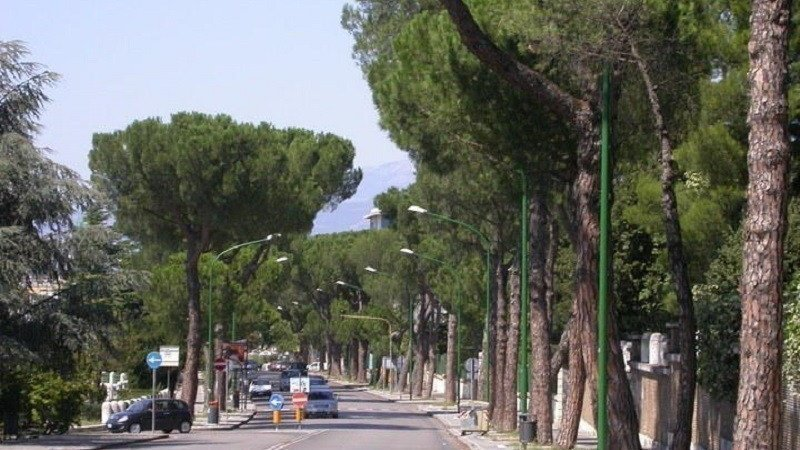 Salviamo i pini di Benevento